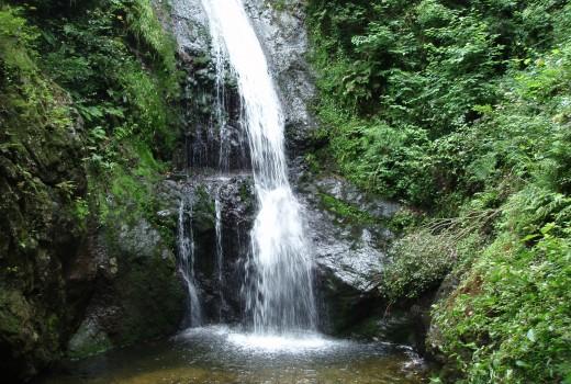八曽自然休養林 八曽滝