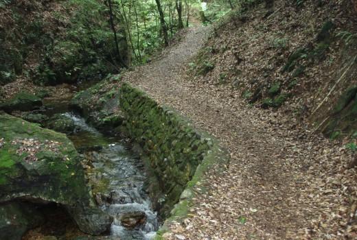 八曽自然休養林遊歩道